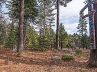 550-fairway-drive-tahoe-city-large-015-15-1499x1000-72dpi.jpg